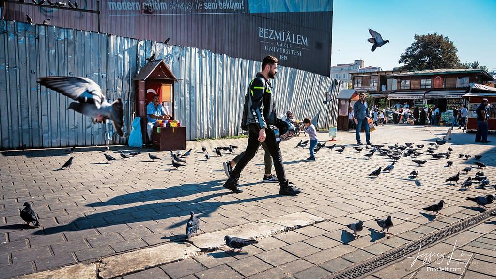 33. A Sea of Pigeons