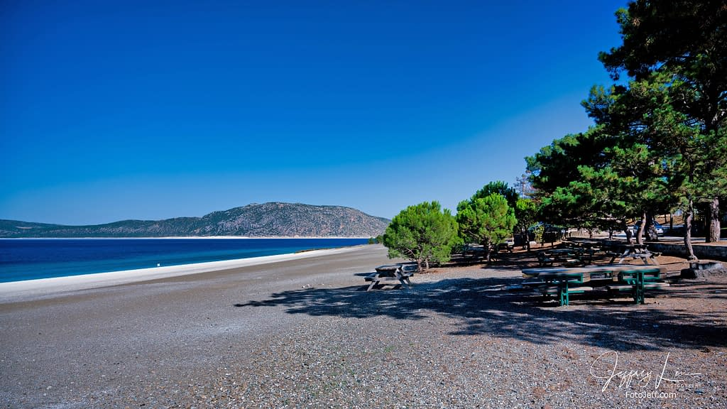 19. Olive Trees in the Ephesus Beach