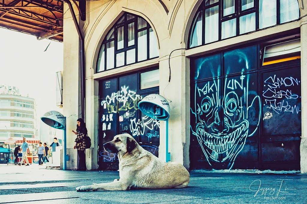 8. Stray Dog