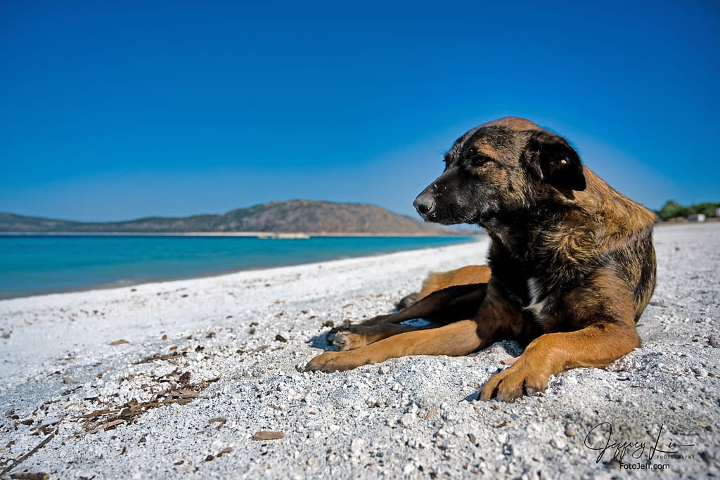 15. A Stray Dog on Ephesus Beach